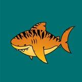 Tiger shark. Stock Photos