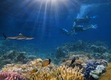 Tiger Shark e fotógrafo subaquáticos Foto de Stock