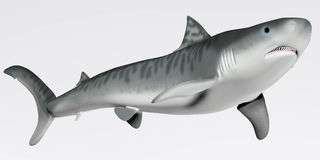 Tiger Shark Profile Stock Images