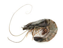 Tiger shrimp Royalty Free Stock Photos