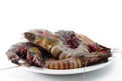 Tiger shrimp Royalty Free Stock Image