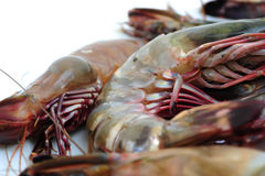 Tiger shrimp Stock Photo