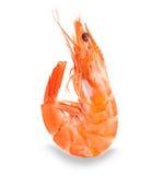 Tiger Shrimp Crevette rose d'isolement sur un fond blanc Photos libres de droits