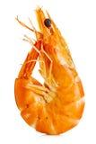Tiger Shrimp Crevette rose d'isolement sur un fond blanc Fruits de mer Images libres de droits