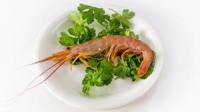 Tiger shrimp Stock Photo