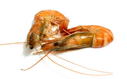 Tiger shrimp isolated Stock Image