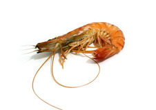 Tiger shrimp isolated Royalty Free Stock Photos