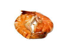 Tiger shrimp isolated Stock Photo