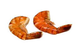 Tiger shrimp isolated Royalty Free Stock Photography