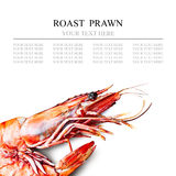 Tiger shrimp Stock Photos