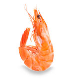 Tiger shrimp. Prawn isolated on a white background. Royalty Free Stock Photos