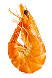 Tiger Shrimp Räka som isoleras på en vitbakgrund Skaldjur Royaltyfria Bilder