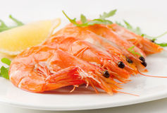 Tiger shrimps Royalty Free Stock Photo