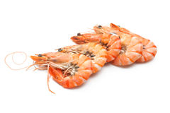 Tiger shrimps Stock Images