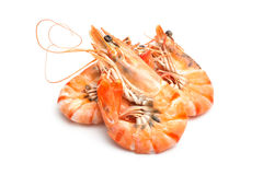Tiger shrimps Royalty Free Stock Photography