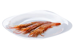 The tiger shrimps Stock Images