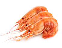 Tiger shrimps isolated on a white background. Seafood. Stock Photo