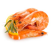 Tiger shrimps with lemon slice and rosemary. Prawns with lemon slice and rosemary isolated on a white background. Seafood Stock Images