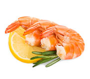 Tiger shrimps with lemon slice and rosemary. Prawns with lemon slice and rosemary isolated Stock Photo