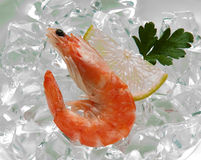 Tiger shrimps with lime, lemon, parsley on ice. Fresh tasty prawns ready to be cooked Stock Images