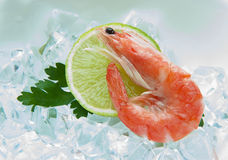 Tiger shrimps with lime, lemon, parsley on ice. Fresh tasty prawns ready to be cooked Royalty Free Stock Image
