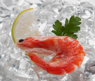 Tiger shrimps with lime, lemon, parsley on ice. Fresh tasty prawns ready to be cooked Stock Photo