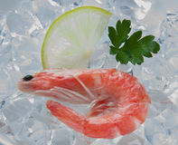 Tiger shrimps with lime, lemon, parsley on ice. Fresh tasty prawns ready to be cooked Stock Photography