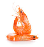 Tiger shrimps. Prawns with isolated on a white background. Stock Images