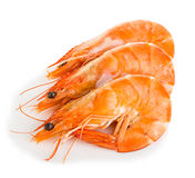 Tiger shrimps. Prawns with isolated on a white background. Royalty Free Stock Photography