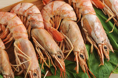Tiger shrimps on wooden Board with Basil leaves Stock Photography