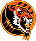 Tiger Side Retro arrabbiato Immagine Stock Libera da Diritti