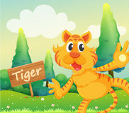 A tiger beside a signboard Stock Images
