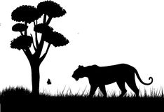 Tiger silhouette. Amidst trees, butterfly and grass Royalty Free Stock Image
