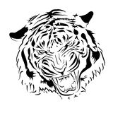 Tiger. Silhouette tiger growls visible grin Stock Photos