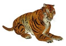 Tiger sitting Stock Photos