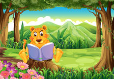A tiger sitting above the stump while reading Stock Images