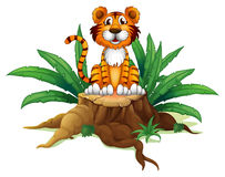 A tiger sitting above a tree Stock Photos