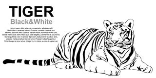 Tiger sitting, black and white, vector Stock Photos