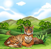 Tiger sitting in the field Stock Photo