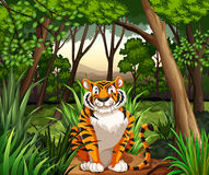 Tiger. Sitting in a jungle stock illustration