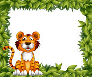 A tiger sitting in a leafy frame Stock Images