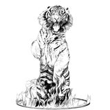 Tiger sketch vector graphics. Tiger full-length is on its hind legs in a circus ring of fire sketch vector graphics black and white drawing Royalty Free Stock Image