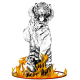 Tiger sketch vector graphics. Tiger full-length is on its hind legs in a circus ring of fire sketch vector graphics black and white drawing and colored flame Royalty Free Stock Photos