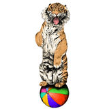 Tiger sketch vector graphics Stock Photo