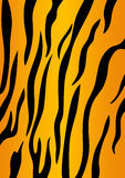 Tiger skin. Vector tiger black and orange stripped tiger design Royalty Free Stock Photo