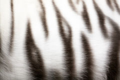 Tiger-skin Stock Photography