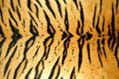 Tiger skin Royalty Free Stock Image
