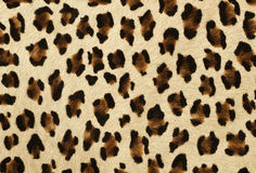 Tiger skin Royalty Free Stock Images