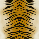 Tiger skin Royalty Free Stock Image