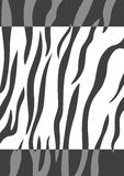 Tiger skin background Royalty Free Stock Image